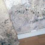 Skimmelsvamp-på-indervæg